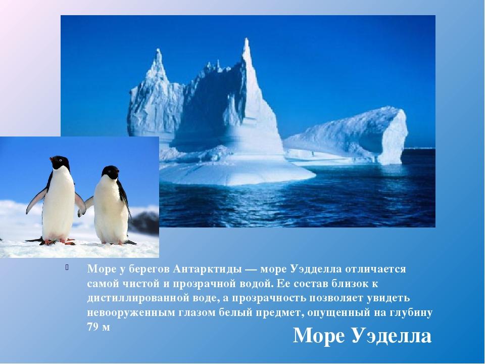 Море у берегов Антарктиды — море Уэдделла отличается самой чистой и прозрачно...