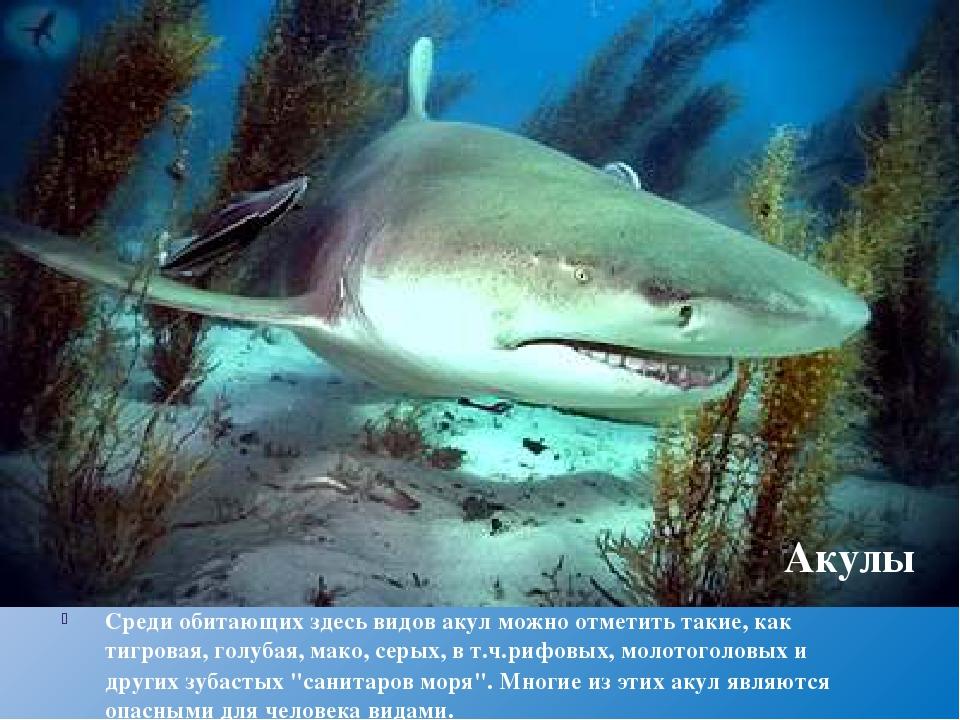 Среди обитающих здесь видов акул можно отметить такие, кактигровая,голубая,...