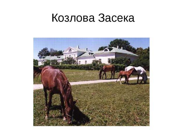 Козлова Засека