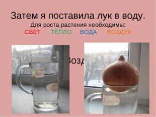 Затем я поставила лук в воду. Для роста растения необходимы: СВЕТ ТЕПЛО ВОДА