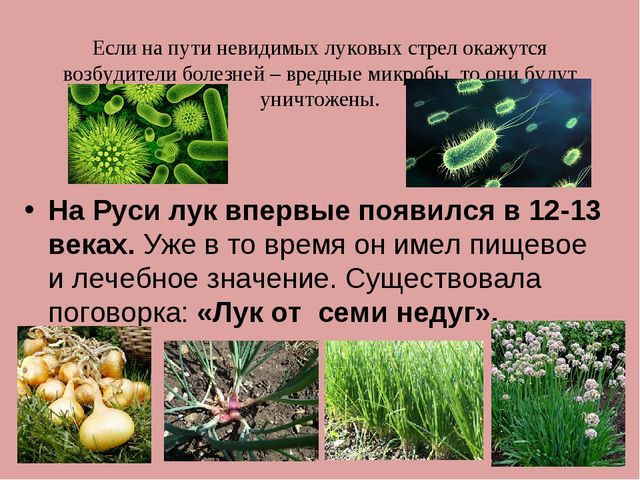 Если на пути невидимых луковых стрел окажутся возбудители болезней – вредные...