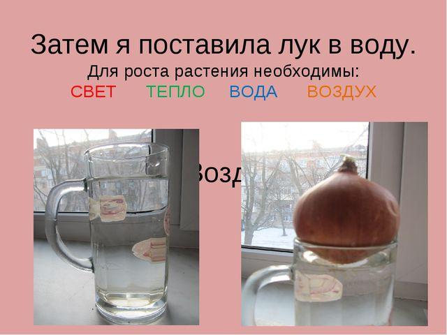 Затем я поставила лук в воду. Для роста растения необходимы: СВЕТ ТЕПЛО ВОДА...