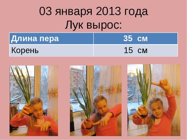 03 января 2013 года Лук вырос: Длина пера35 см Корень15 см
