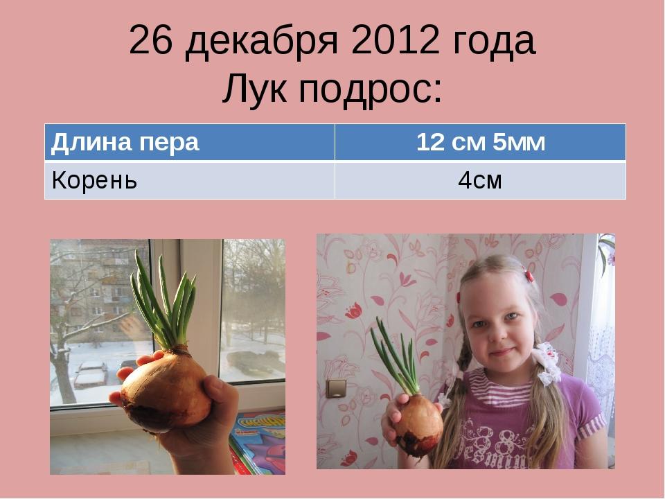 26 декабря 2012 года Лук подрос: Длина пера12 см 5мм Корень4см