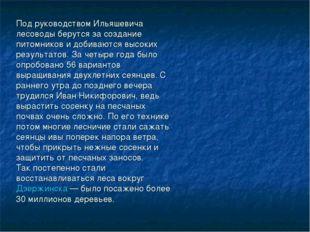Под руководством Ильяшевича лесоводы берутся за создание питомников и добиваю