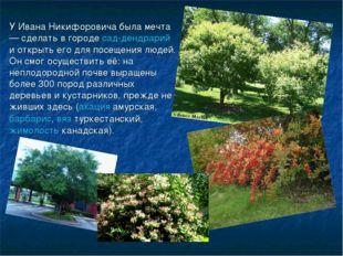 У Ивана Никифоровича была мечта — сделать в городесад-дендрарий и открыть ег