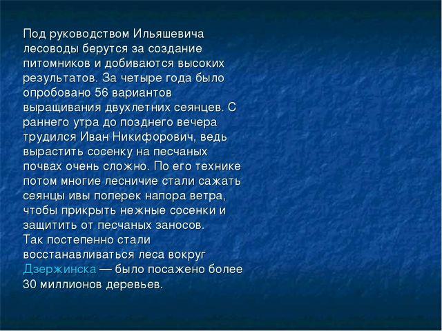 Под руководством Ильяшевича лесоводы берутся за создание питомников и добиваю...