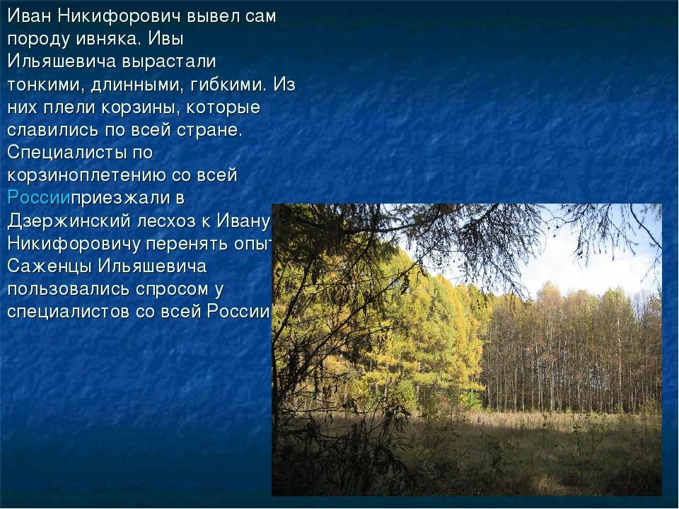 Иван Никифорович вывел сам породу ивняка. Ивы Ильяшевича вырастали тонкими, д...