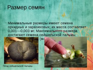 Минимальные размеры имеют семена орхидных и заразиховых; их масса составляет