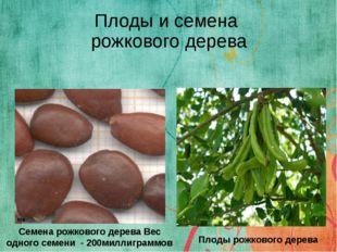 Плоды и семена рожкового дерева Семена рожкового дерева Вес одного семени - 2