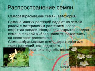 Саморазбрасывание семян (автохория) Семена многих растений падают на землю ря