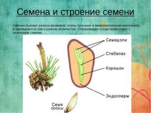 Семена бывают разных размеров: очень большие и микроскопически маленькие, и з