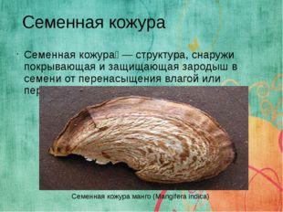 Семенная кожура́ — структура, снаружи покрывающая и защищающая зародыш в семе