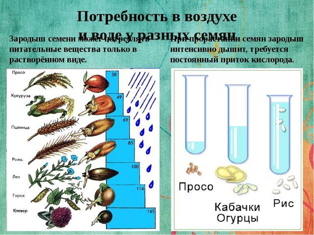 Потребность в воздухе и воде у разных семян Зародыш семени может потреблять п...
