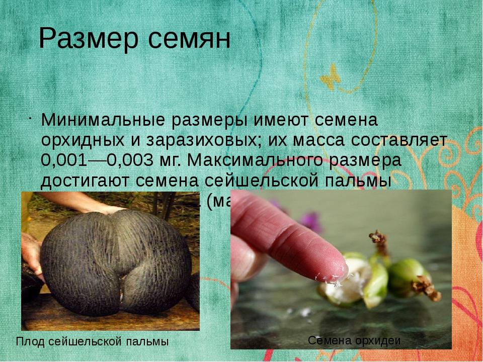 Минимальные размеры имеют семена орхидных и заразиховых; их масса составляет...