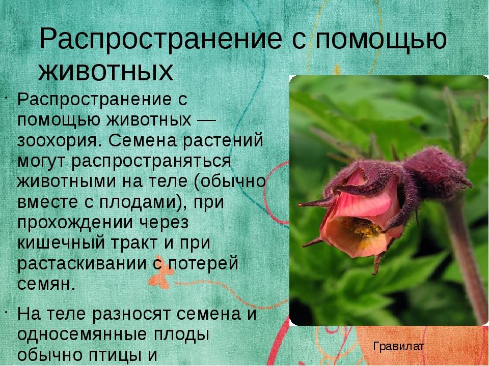 Распространение с помощью животных Распространение с помощью животных — зоохо...