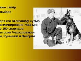 Собака- сапёр Джульбарс Благодаря его отличному чутью было разминировано 7468
