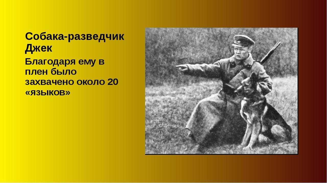 Собака-разведчик Джек Благодаря ему в плен было захвачено около 20 «языков»