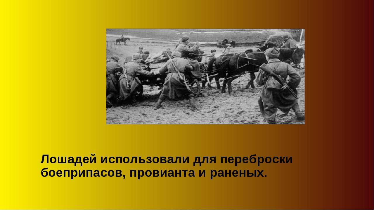 Лошадей использовали для переброски боеприпасов, провианта и раненых.