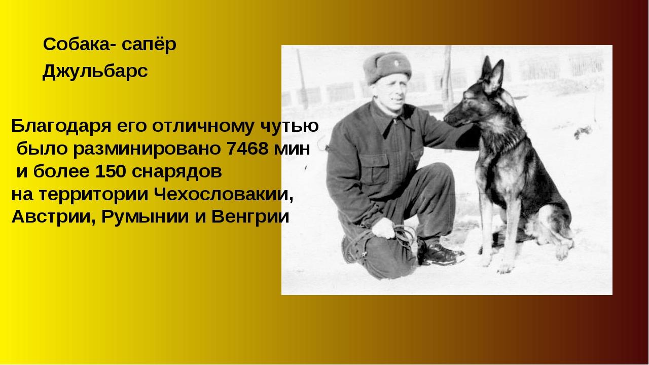Собака- сапёр Джульбарс Благодаря его отличному чутью было разминировано 7468...