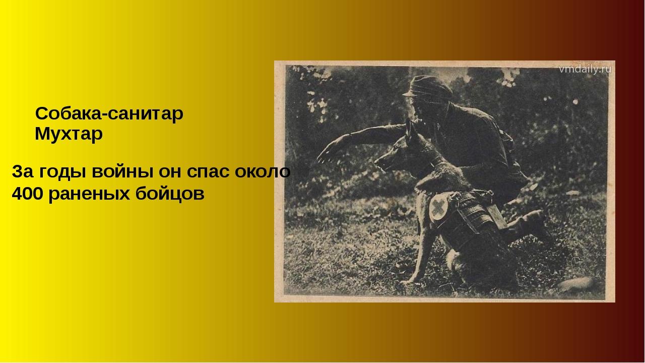 Собака-санитар Мухтар За годы войны он спас около 400 раненых бойцов