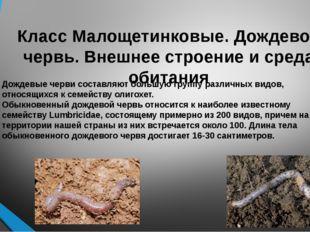 Класс Малощетинковые. Дождевой червь. Внешнее строение и среда обитания Обыкн