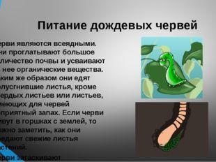 Питание дождевых червей Черви являются всеядными. Они проглатывают большое ко