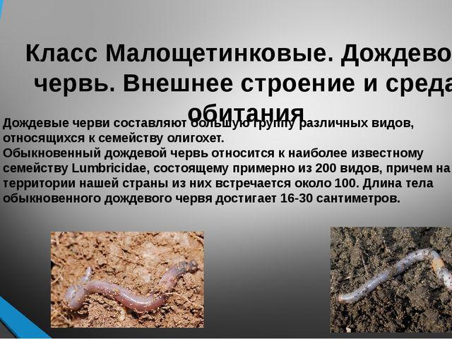 Класс Малощетинковые. Дождевой червь. Внешнее строение и среда обитания Обыкн...