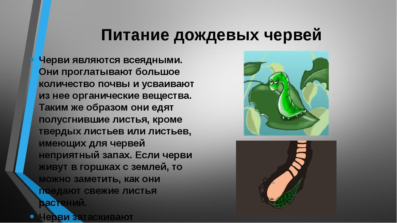 Питание дождевых червей Черви являются всеядными. Они проглатывают большое ко...