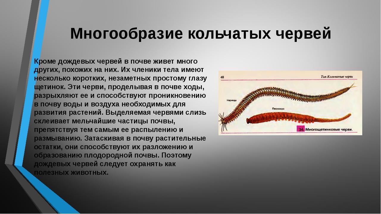 Многообразие кольчатых червей Кроме дождевых червей в почве живет много други...