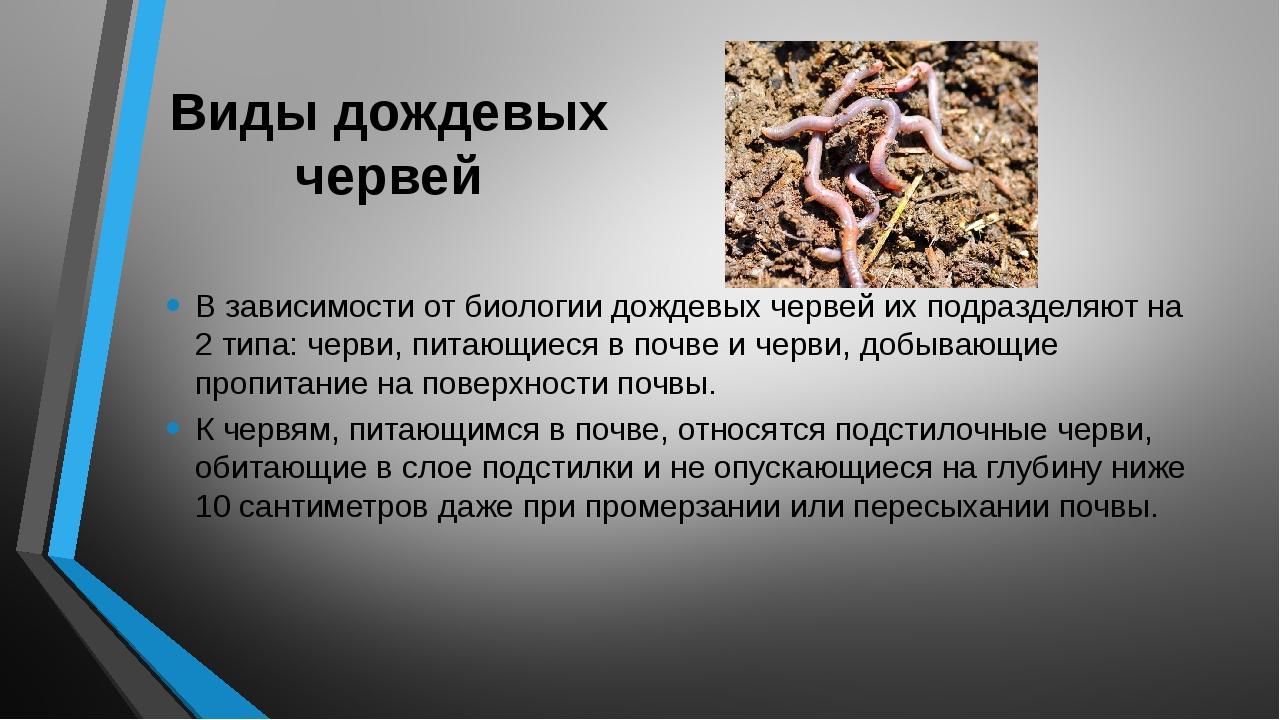 Виды дождевых червей В зависимости от биологии дождевых червей их подразделяю...
