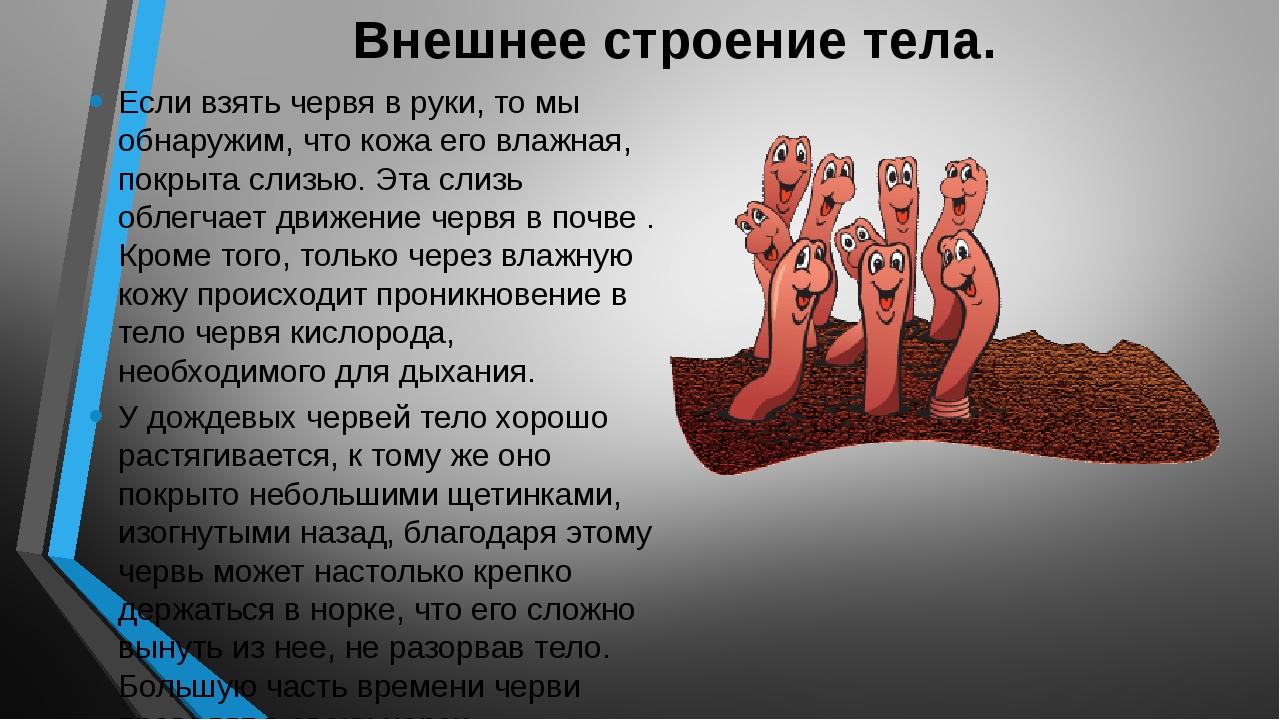 Внешнее строение тела. Если взять червя в руки, то мы обнаружим, что кожа его...