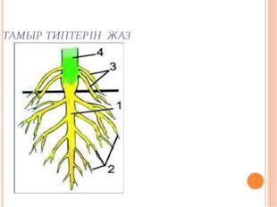 ТАМЫР ТИПТЕРІН ЖАЗ