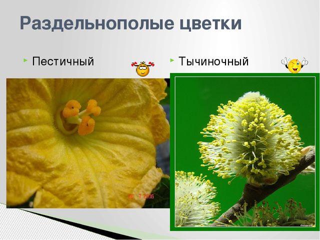 Раздельнополые цветки Тычиночный Пестичный