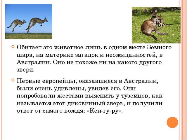 Обитает это животное лишь в одном месте Земного шара, на материке загадок и...