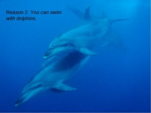 Reason 2. You can swim with dolphins.