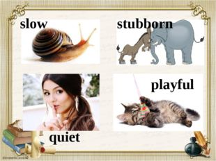 slow stubborn quiet playful