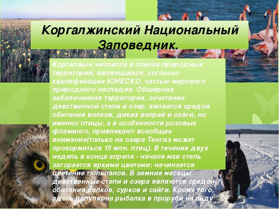 Коргалжинский Национальный Заповедник. Коргалжын числится в списке природных...