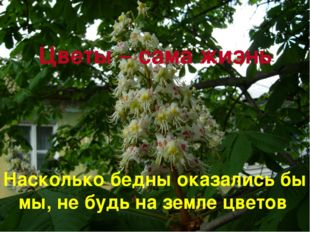 Цветы – сама жизнь Насколько бедны оказались бы мы, не будь на земле цветов