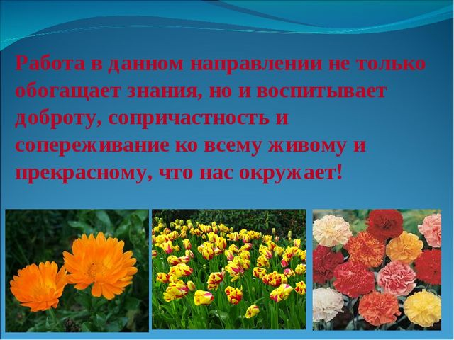 Работа в данном направлении не только обогащает знания, но и воспитывает добр...