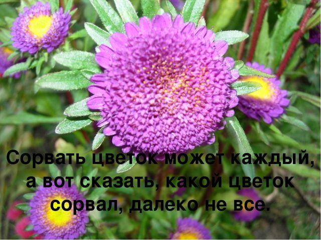 Сорвать цветок может каждый, а вот сказать, какой цветок сорвал, далеко не все.