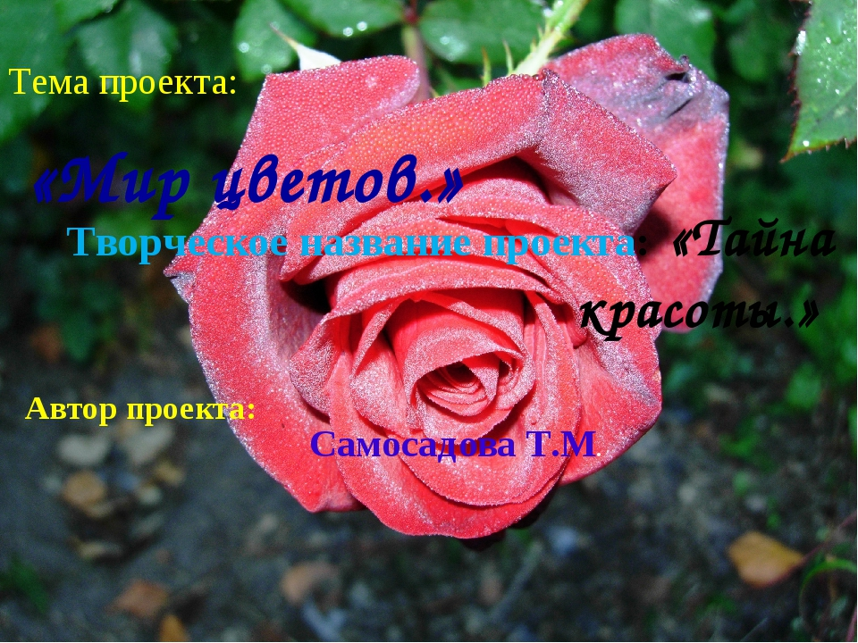 Тема проекта: «Мир цветов.» Творческое название проекта: «Тайна красоты.» Авт...