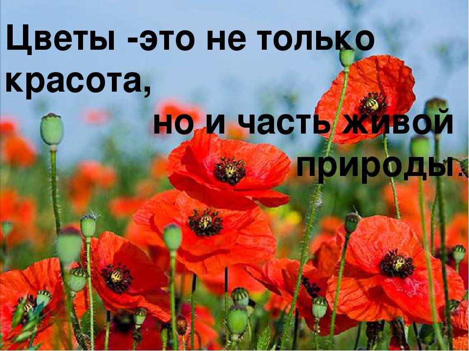 Цветы -это не только красота, но и часть живой природы.