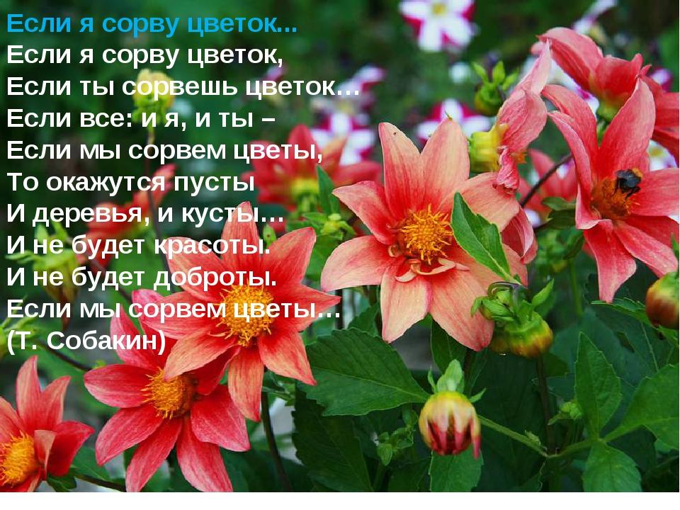 Если я сорву цветок... Если я сорву цветок, Если ты сорвешь цветок… Если все:...