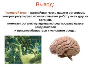 Вывод: Головной мозг – важнейшая часть нашего организма, которая регулирует и