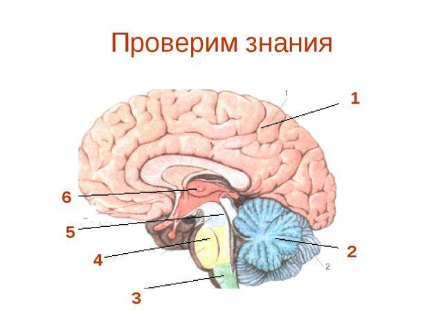 Проверим знания 1 2 3 5 6 4