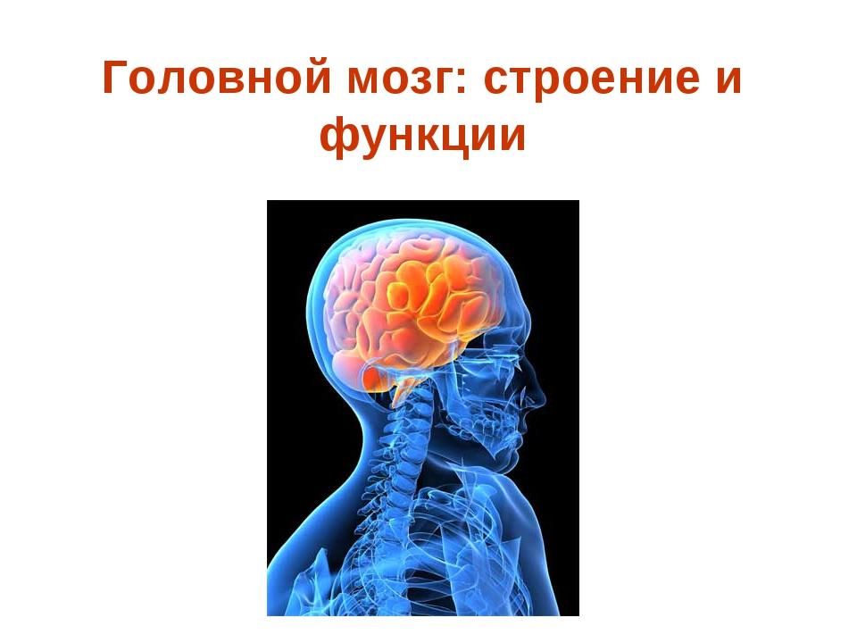 Головной мозг: строение и функции