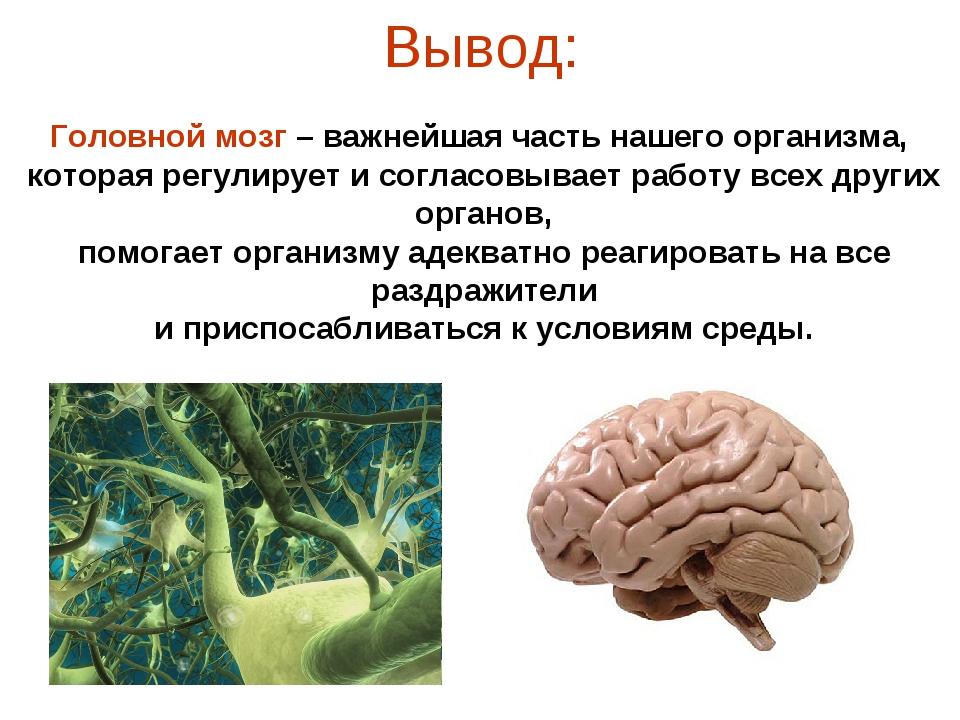 Вывод: Головной мозг – важнейшая часть нашего организма, которая регулирует и...