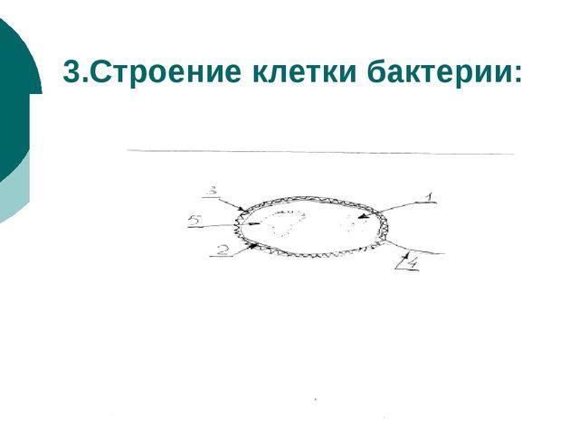3.Строение клетки бактерии: