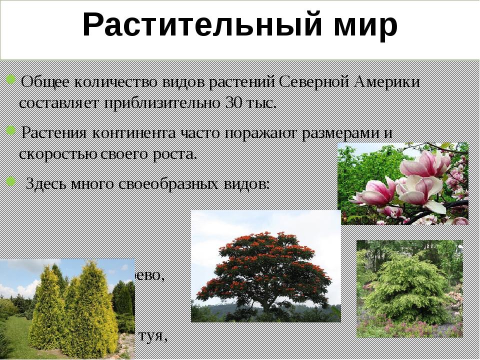 Растения северной америки список с фото